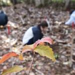 100本植林中の様子3